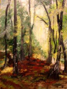 az erdő illata