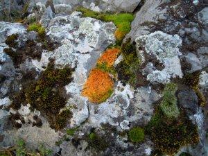 Mohás sziklák