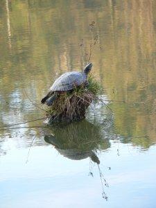 Ősz, teknős-szigeten