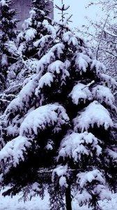 Téli táj 3.