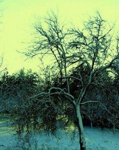 Téli táj 4.