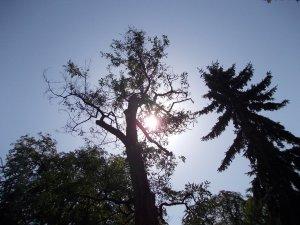 Egy szép  pillanat a fák között....