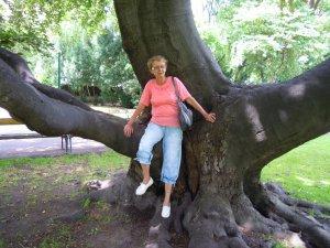 Öreg fa árnyékában...