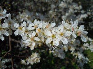 Tavaszi zsongás