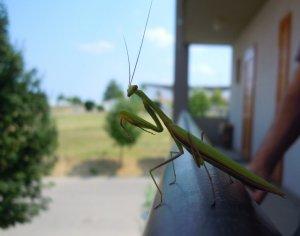 Hívatlan látogató