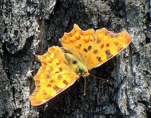 Egy szem(telen) pillangó - Juditnak szeretettel