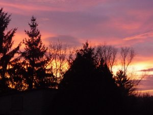 Napkelte fenyővel
