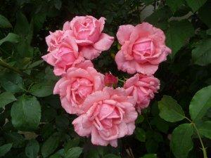 Rózsaszív kertemből
