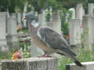 Madár a temetőben