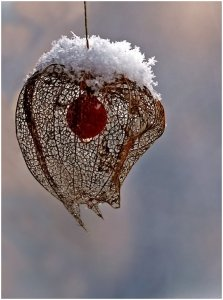 Téli lámpion