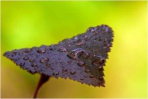Eső után 2