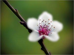 Tavasz 2