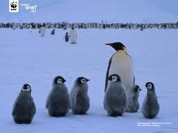 Pingvinóvoda
