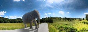 Elefánt Bátaapátiban