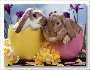 Kellemes Húsvéti Ünnepeket!!