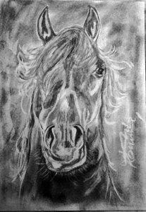 Ló!!   Grafitpor és radír,amivel csináltam.