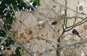 A madarak hálája