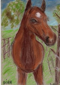 HÓRA nevű oktató ló