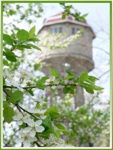 Tavasz minálunk, toronyiránt... :)