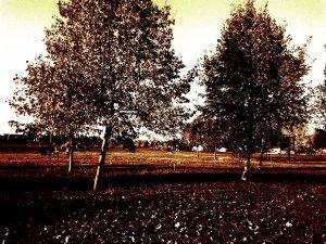 Temető fái késő ősszel 1.