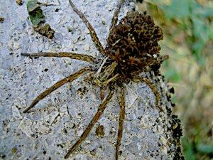 Pókék költöznek ...
