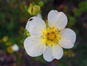 ... egy kisvirág mosolya