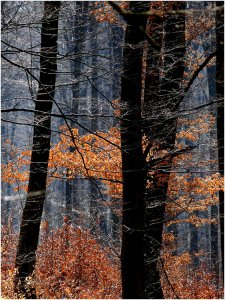 Tavaszi erdő,öszi fénybe